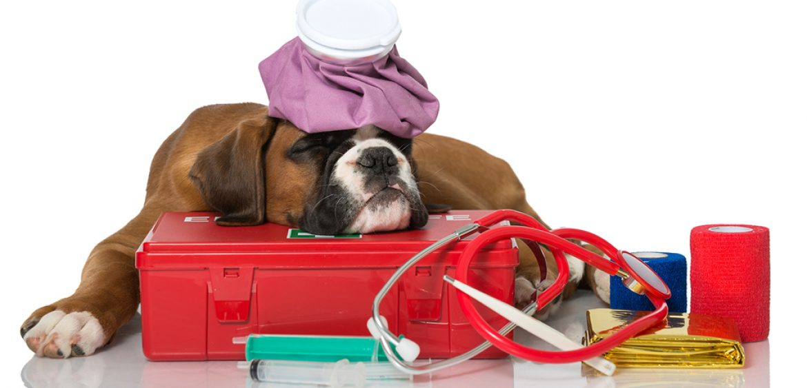 How To Make A First Aid Kit For Your Dog - Three Million Dogs |First Aid For Pets Files